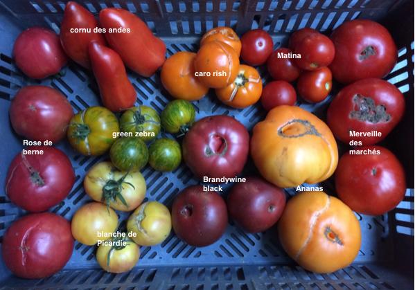 tomates selection 2016